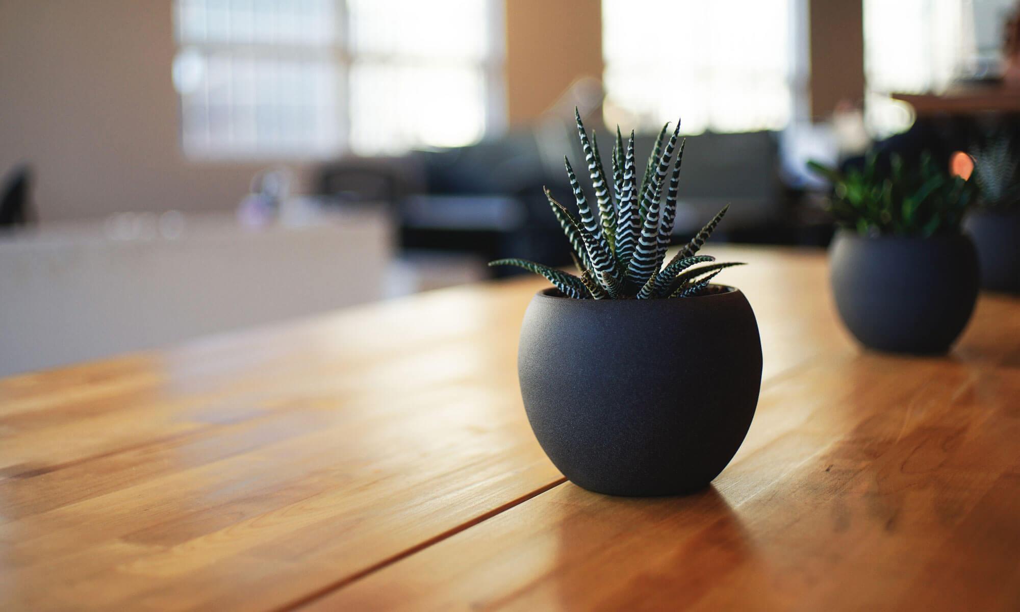 hoodedcactus